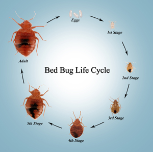 Do bed bug sprays really work