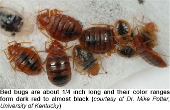 ... bed bugs, dead bed bugs, cast skins, fecal stains and bed bug eggs